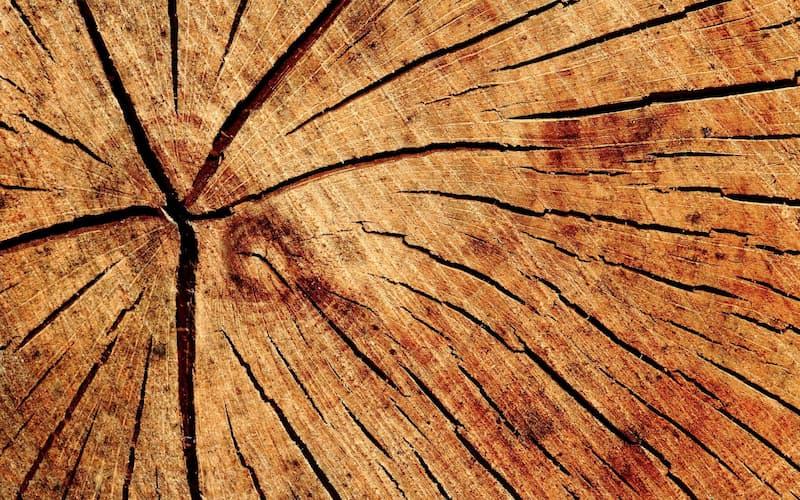 coupe bille de bois